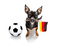 soccer football dog
