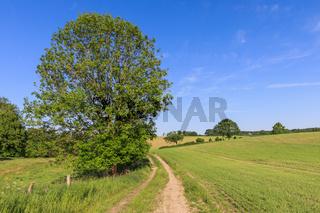 Feldweg durch Landschaft mit Getreidefeldern