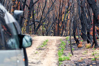 Driving through burnt bush land after summer fires