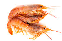 Three raw shrimp langostino