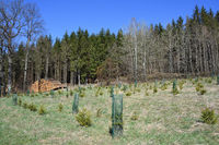 Reforestation in a forest