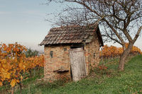 Vineyard shed