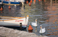 Two Swans and the Boat