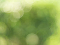 Natural outdoors bokeh background in green and yellow tones, Blurred green tree leaf background with bokeh