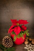 Poinsettia in a red pot stands against a gray background, decorated with pine cones and a straw star