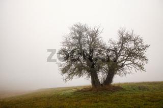 einzeln stehender baum im Nebel