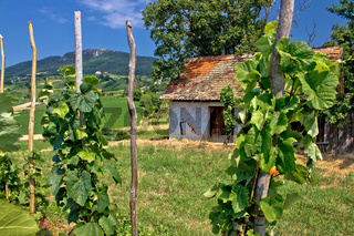 Traditional vineyard and cottage in Kalnik