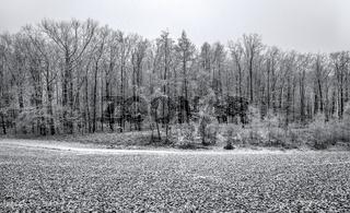 Winterwald im Vogtland