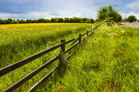 Fence in the green field