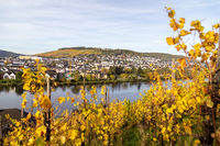 Bernkastel-Kues and the river Moselle in autumn with multi colored vineyard in the foreground