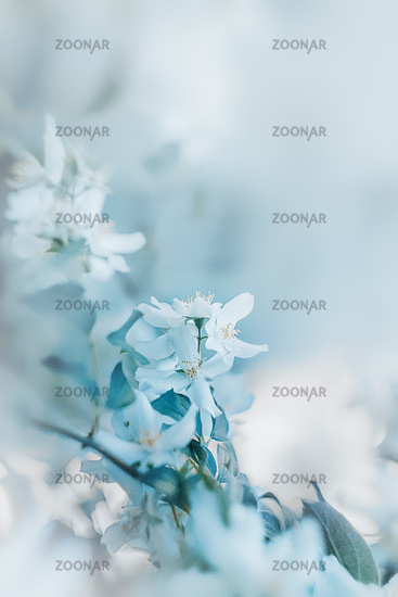 white flowers on a blurred background