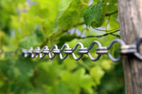 tension chain in the vineyard