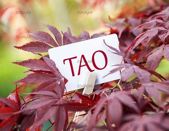 "The Word ""Tao"