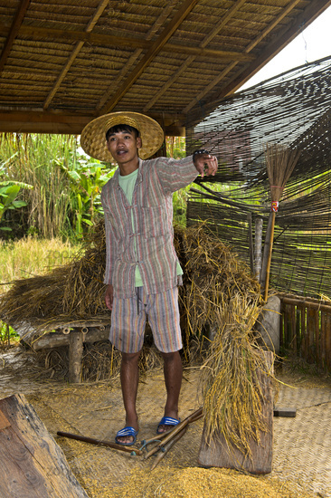 Young man demonstrating the tradional threshing of rice plants on a threshing board, Laos