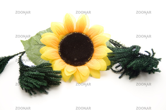 Sunflower with green branch