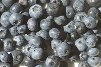 20200730_Vaccinium corymbosum, Kulturheidelbeere, northern highbush blueberry002.jpg