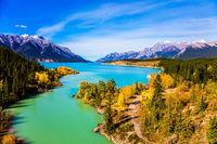 The golden autumn groves of aspen
