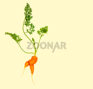Creative layout of a carrot with leaves isolated on yellow background