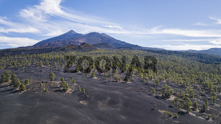 Chinyero Forest with Teide Volcano