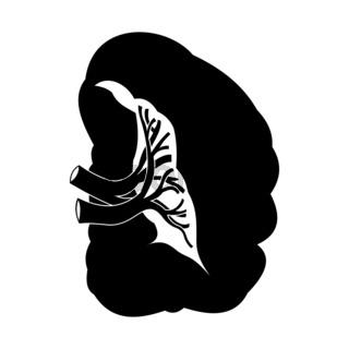 Spleen black icon