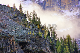 Low clouds above pine trees, Lake O'Hara, Yoho National Park, Canada