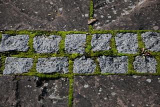 Pflaster, Granit, Porphyr, Moos, Flechten