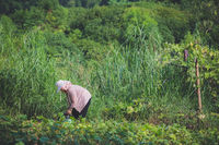 Chinese woman working in the field