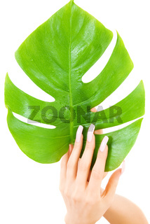 female hands with green leaf