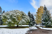 First snowfall in colorful autumn city park