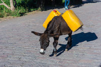 Donkey carrying water canisters, Ethiopia