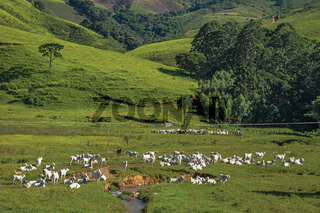 View of grassy fields with cows grazing
