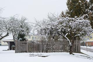Apfelbaum verschneit im Winter