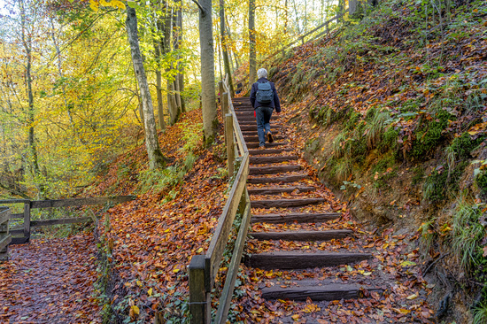Hiker on stairs in the forest