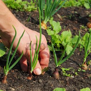 Unkraut jaeten - pull up weeds 02