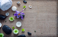 Spa still life with black stones, violet crocus and towel.