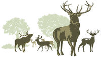 Deer pack with antlers silhouettes - Illustration