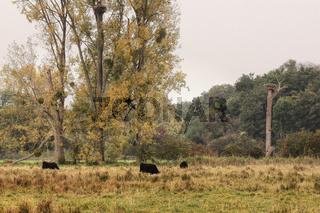 Naturschutzgebiet Bruchwiesen