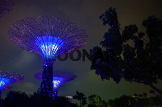 Gardens by the Bay in Singapore at Night