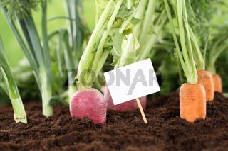 Frisches Gemüse im Garten mit einem leeren Schild