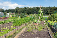 Dutch allotment garden in autumn with garden equipment