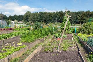 Dutch allotment garden in autumn with garden equipment