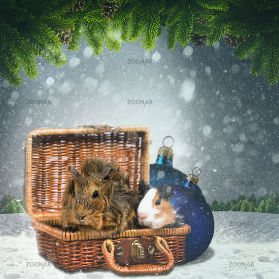 Abstract winter and Xmas backgrounds with funny animals for your design