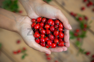 A handful of fresh raw rose hips on blurred background