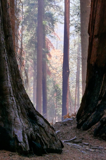 southwest USA, Sequoia and Kings Canyon National Park California sun