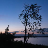 Silhouette of a tree on the shore of lake