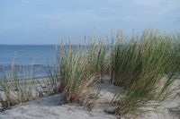 Dune landscape on the Baltic Sea, Heiligenhafen
