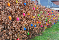 Garden hedges are colorfully decorated with Easter eggs for Easter