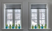Flowerpots of Dwarf Daffodils, Narcissus in the window post