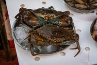 crabs on seafood market, crayfish for sale -