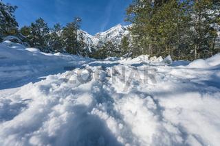 Winter walking path through snow an pine forest in Austrian Alps at Mieming, Tyrol, Austria